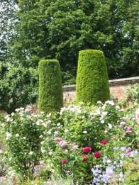 Irish Yew sentinels