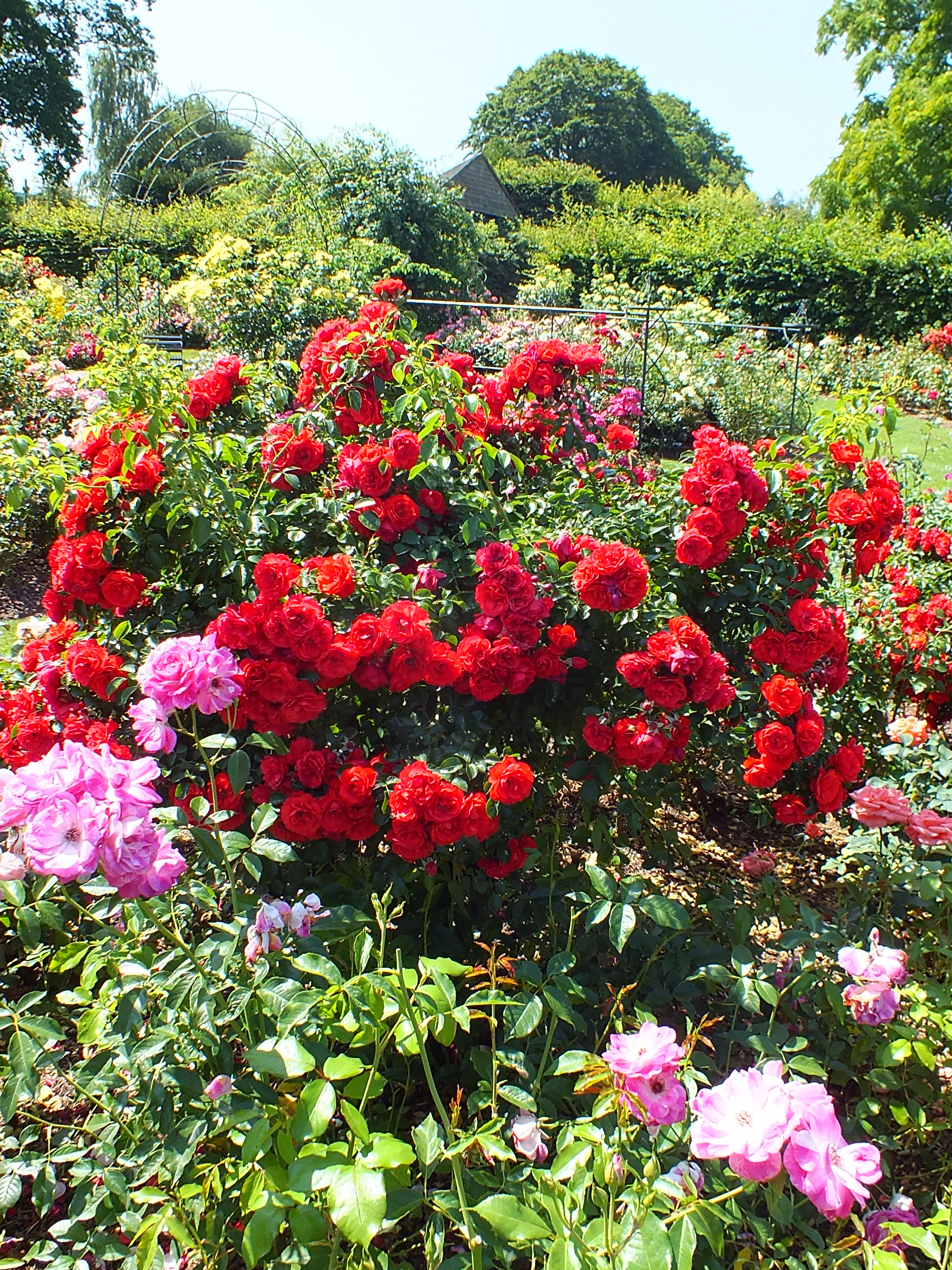 RHS Wisley  a Rose Garden a walk in the Woods another