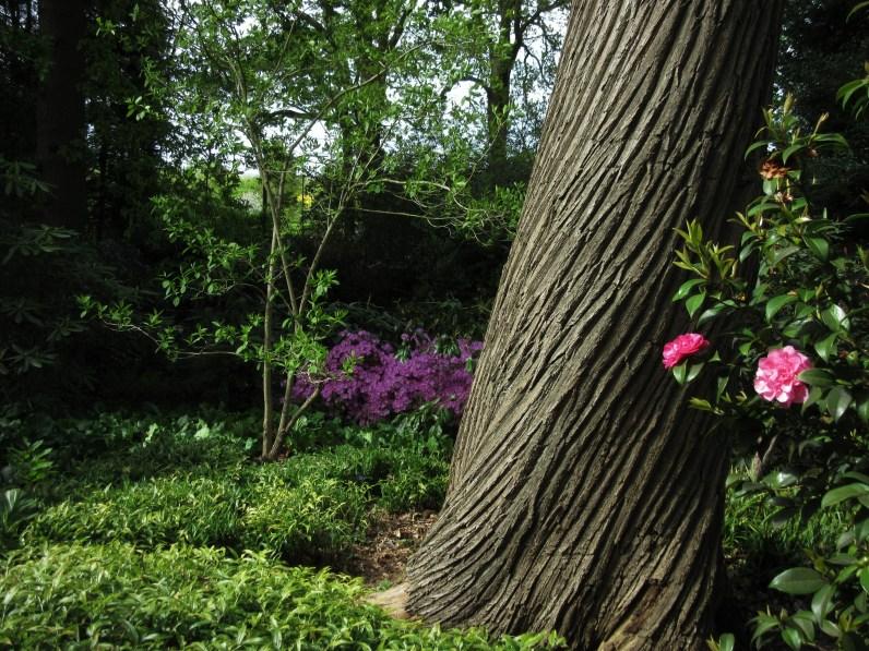The swirling bark of Castanea sativa