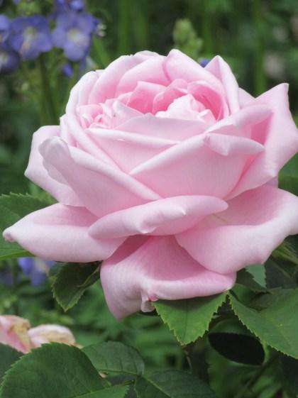 Baroness Rothschild