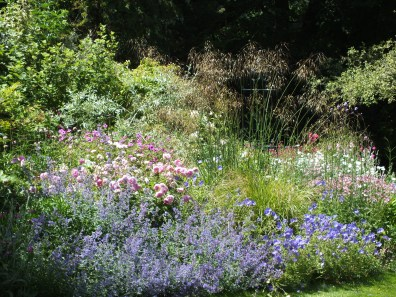 soft blue pink border with grasses