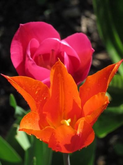 tulip ballerina barcelona