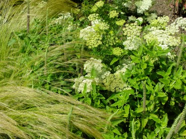 waterperry gardens green grass veronica ammi