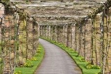 Rose Pergola at Kew