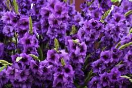 Purple Flora