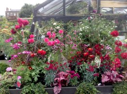Similar colours and planting on display