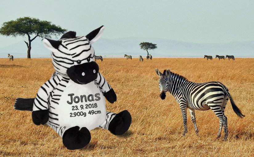 Zebra mit Namen – ein einzigartiges Geschenk