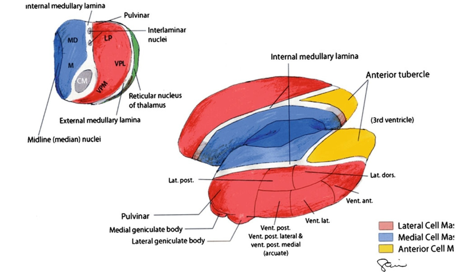 reticular formation diagram 36 volt ezgo golf cart battery wiring part of brain which controls consciousness medical