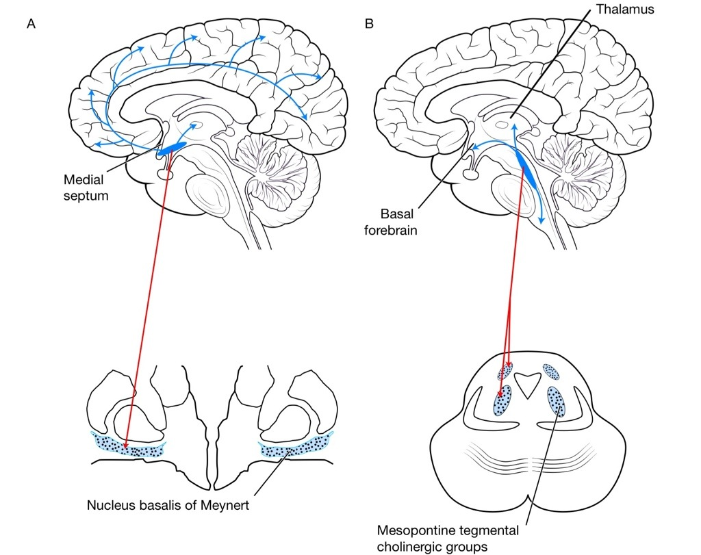 Part Of Brain Which Controls Consciousness Medical