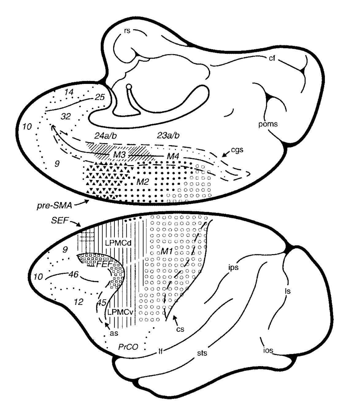 Diagram Of Your Ear