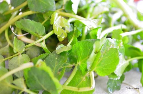 Zöldeket eszünk – egy kicsit a yörük konyháról