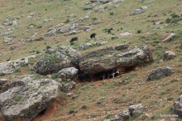 Hűsölő tehenek