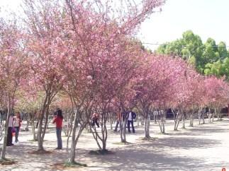 park tree flowers.jpg