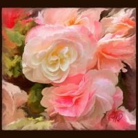 Vicky's Begonias