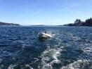 Boat ride around Bainbridge!