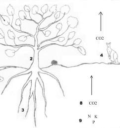 photosynthesis  [ 4192 x 2912 Pixel ]