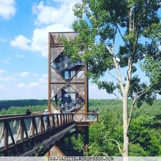 Pastaiga starp koku galotnēm Anīkšķos Lietuvā