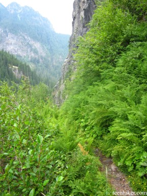Trail through lush greenery