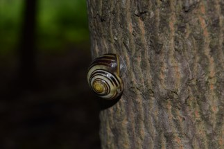 A giant snail climbing a tree! How's that for adventure?! Think he made it?