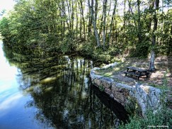 72-Trees-Canal-082216_46