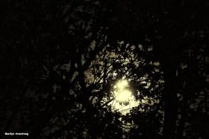 72-harvest-moon-09162016_12
