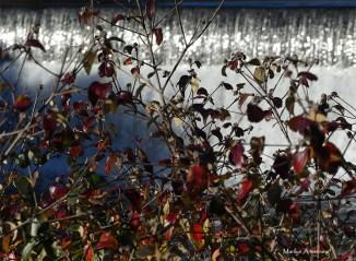 72-mumford-dam-ma18112016_026