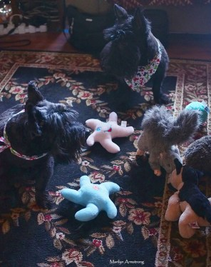72-dogs-toys2-10122016_031