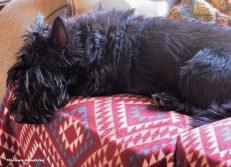 72-gibbs-december-dogs-02122016_010