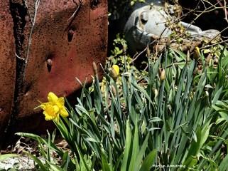 180-First-Daffodils-041617_001