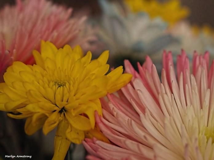 300-spring-bouquet-041517_021