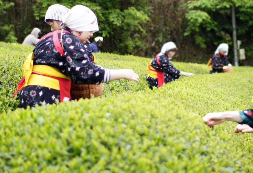 Teenkorjuuta Japnissa