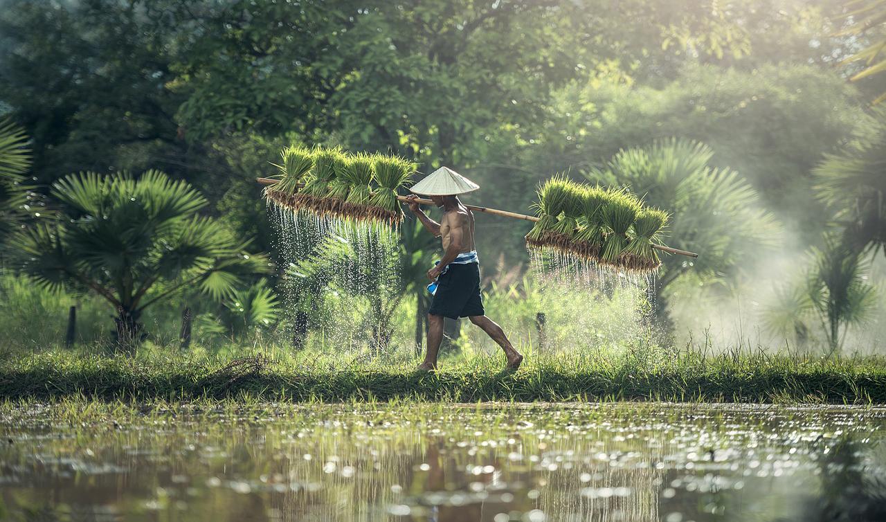 Paid Internship Myanmar