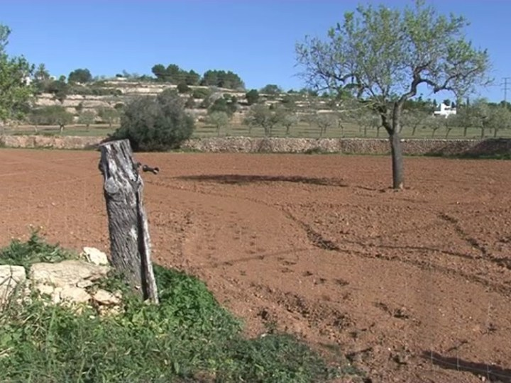 08/02 Els propietaris de finques de Sant Josep lamenten la moratòria del Govern a la Llei Agrària