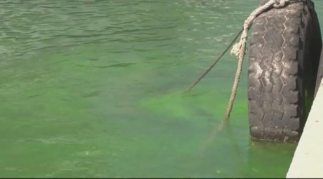 La badia de Sant Antoni, tenyida de verd