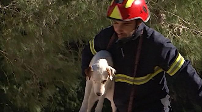 24/01 El Bombers d'Eivissa creen una unitat de rescat canina