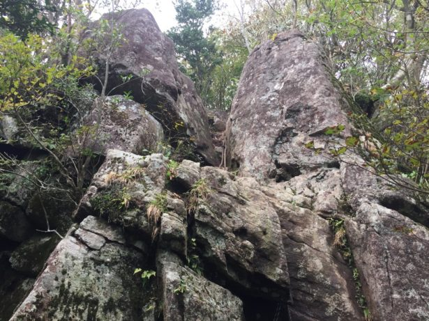こんな崖を登っていくんですよ
