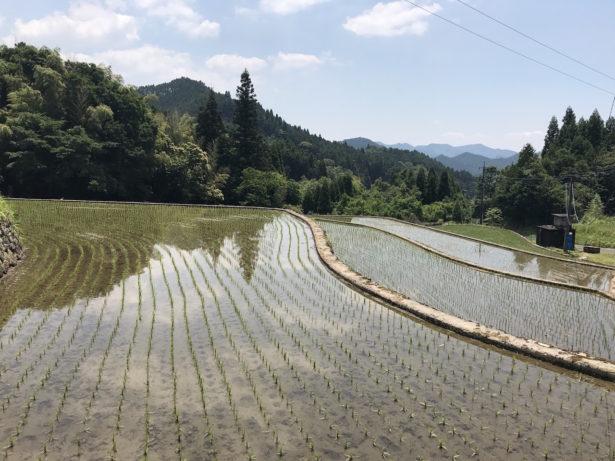竹地区の棚田