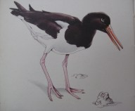 Oyster-Catcher piping by R B Talbot Kelly