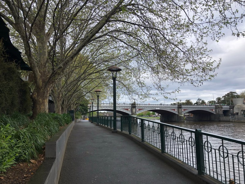Trees along river front