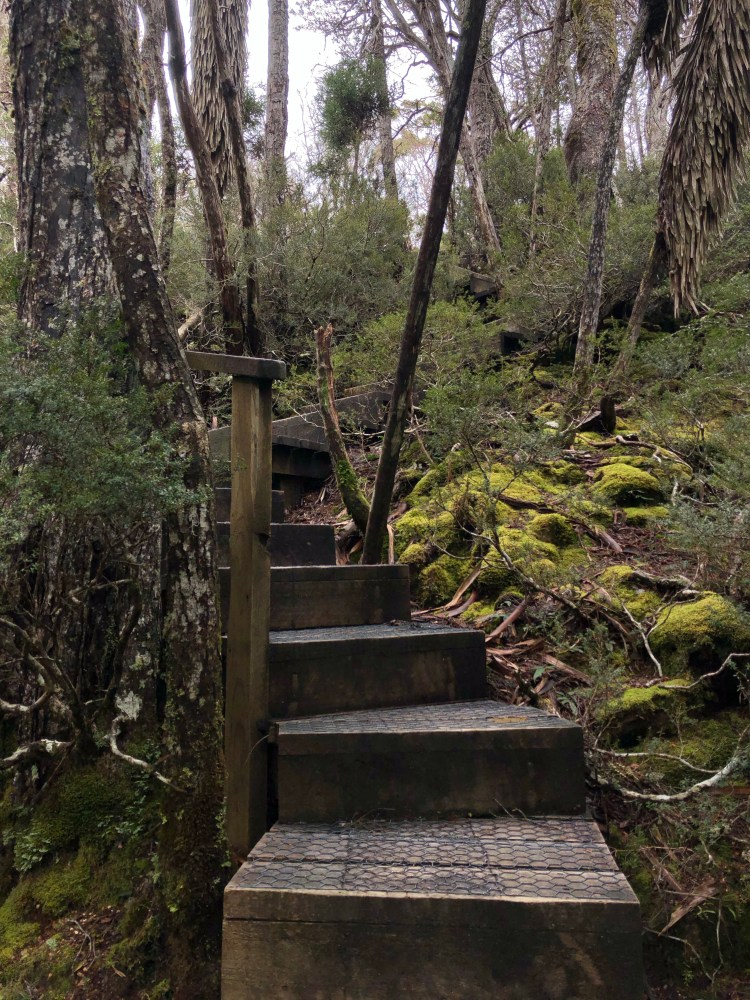 wooden steps in nature