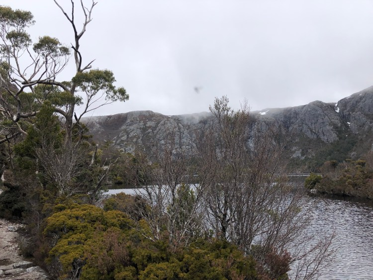 trees surrounding lake