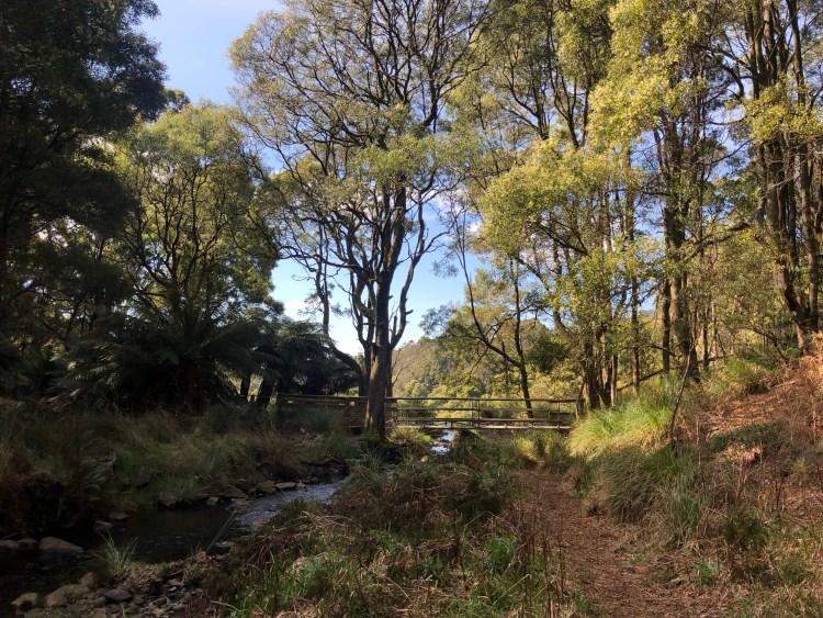 Bridge in nature