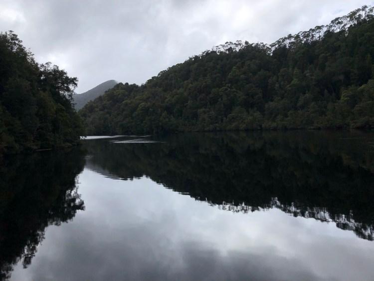 trees reflecting in ocean