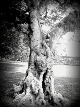 tree in front of the castle - Banten