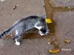 cats afraid water
