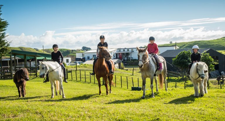 four horses about to go trekking at te horo equestrian