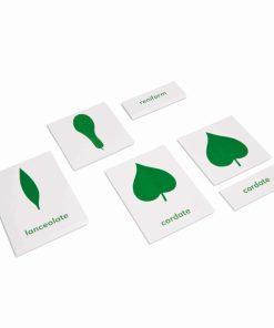 Botany cabinet nomenclature cards - Nienhuis Montessori