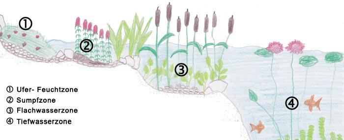 Teichzonen im Gartenteich  Aufbau der verschiedenen Zonen im Teich