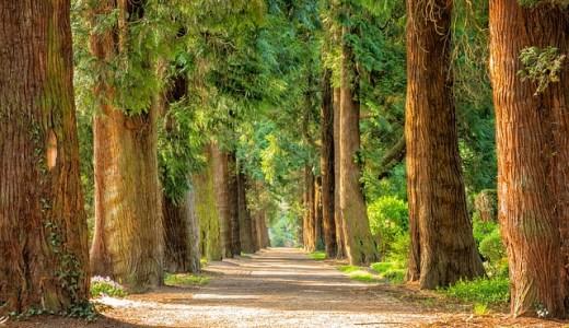「決定木」「ランダムフォレスト」わかりやすいサイトまとめ