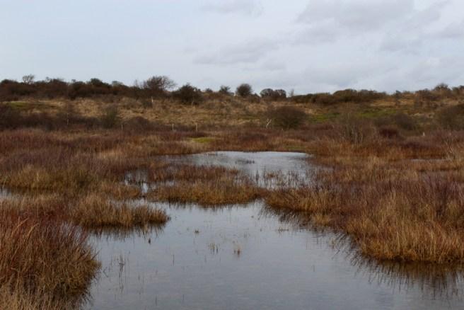 Nationalpark Zuid-Kennemerland